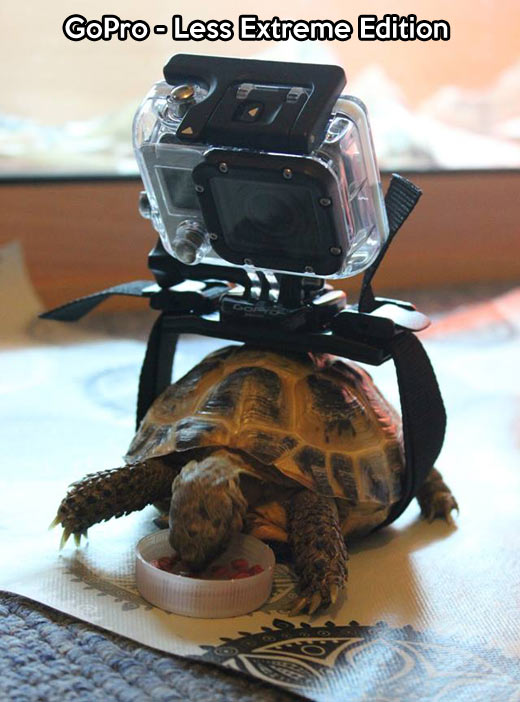 funny-turtle-GoPro-eat-video