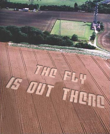 theflyisoutthere