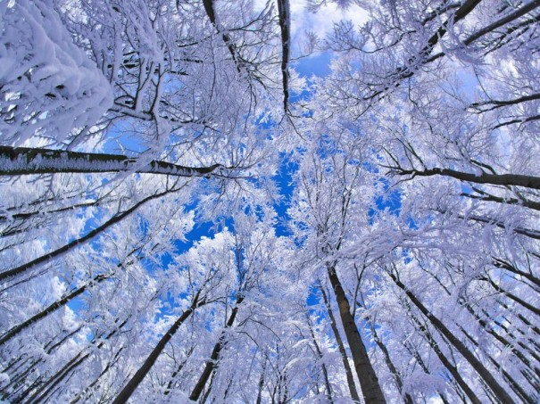 snowgod