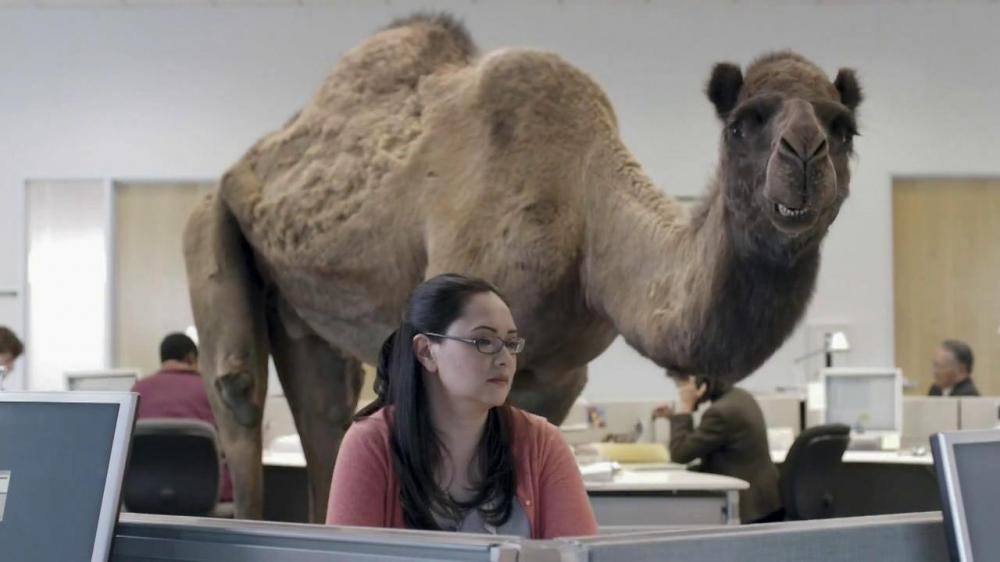 geico-camel-on-hump-day-large-7