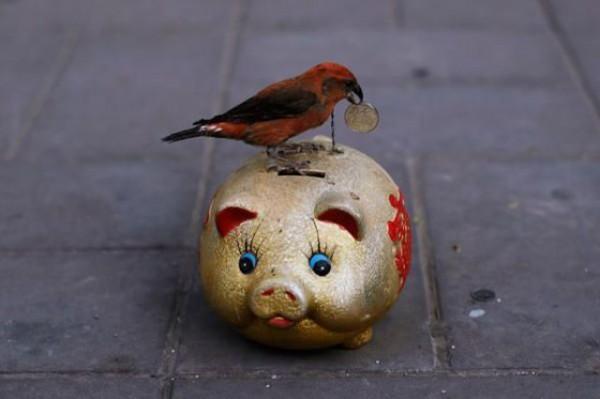birds and Money