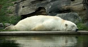 SleepingBear