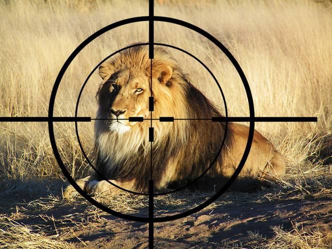 lion-in-crosshairs-photo-jpg-662x0_q70_crop-scale