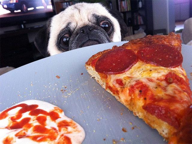 pugs_and_food_1